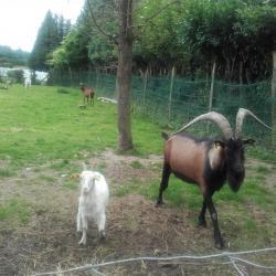 les animaux de ferme